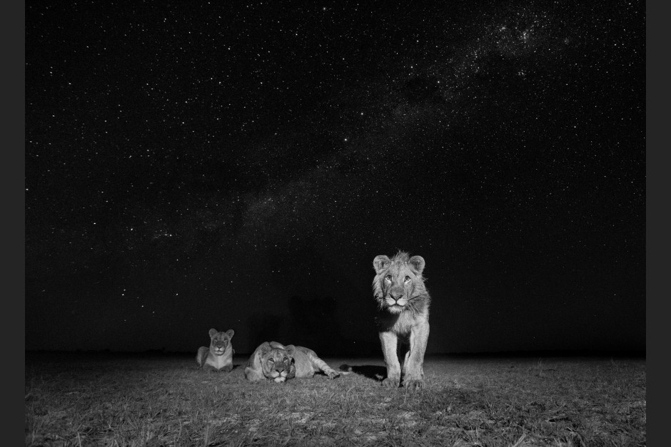 Will Burrard-Lucas: African Wildlife at Night 01