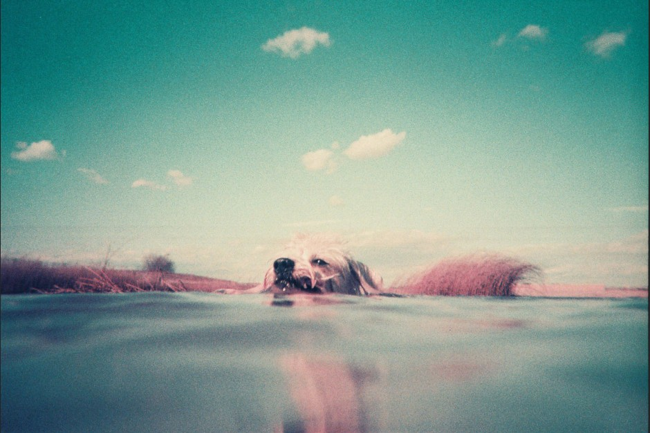 Bild aufgenommen mit der Analogue Aqua - Simple Use Reloadable Camera & Underwater Case LomoChrome Purple