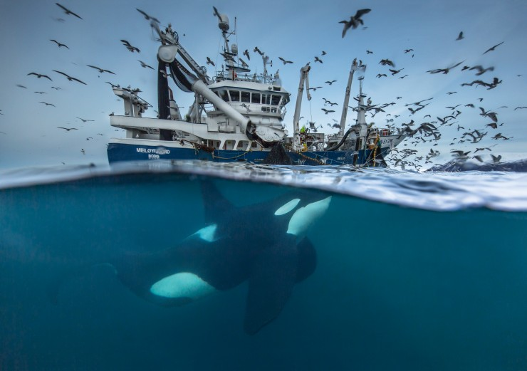 Wildlife Photographer of the Year 2016: Audun Rikardsen