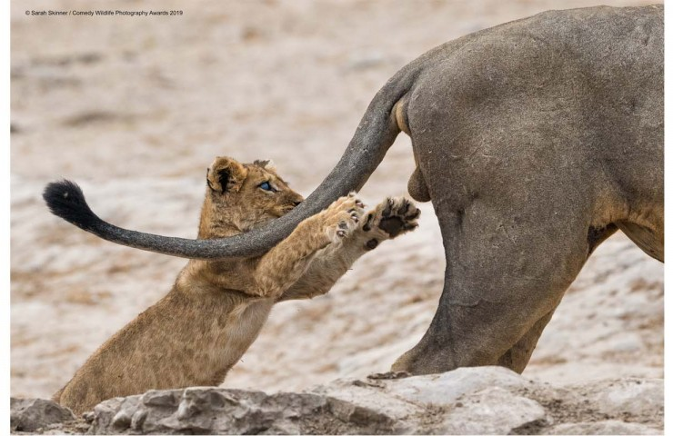 Gewinnerbild der Comedy Wildlife Photography Awards 2019